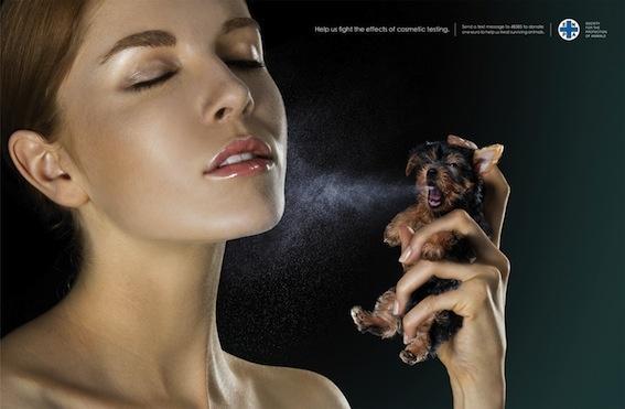 Empresas Test Animales